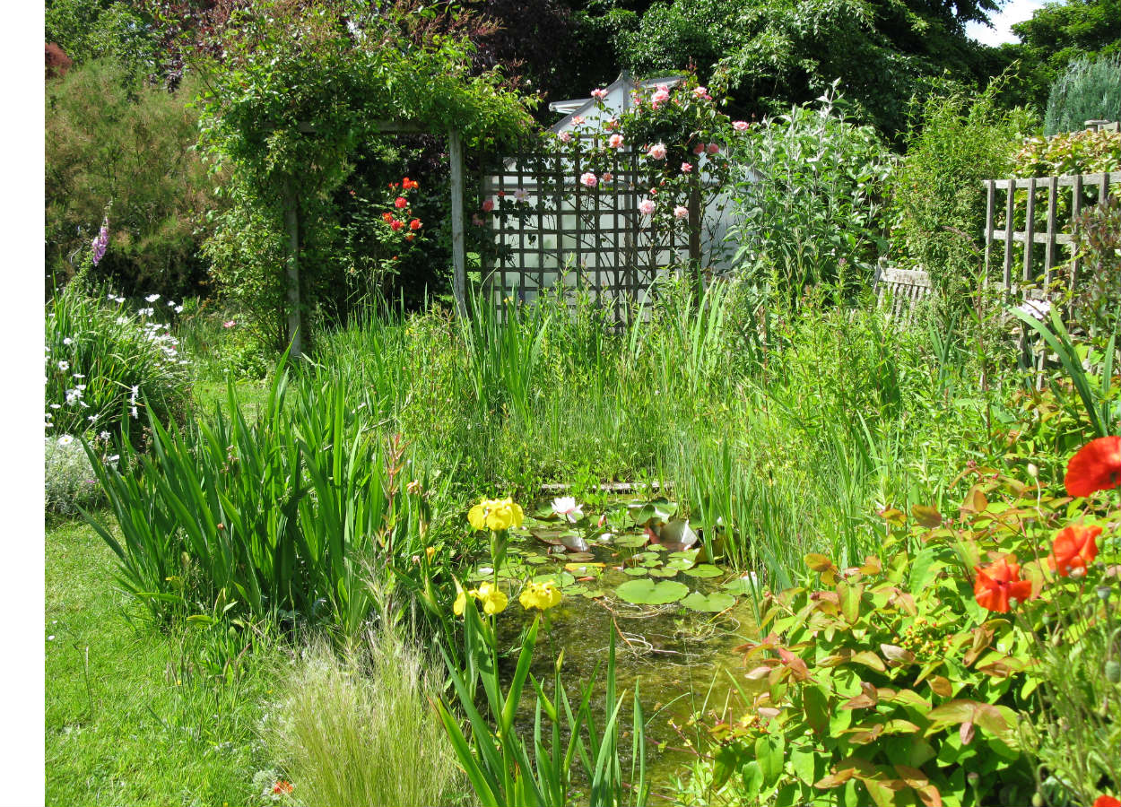 A wild and lush garden centered around a pond