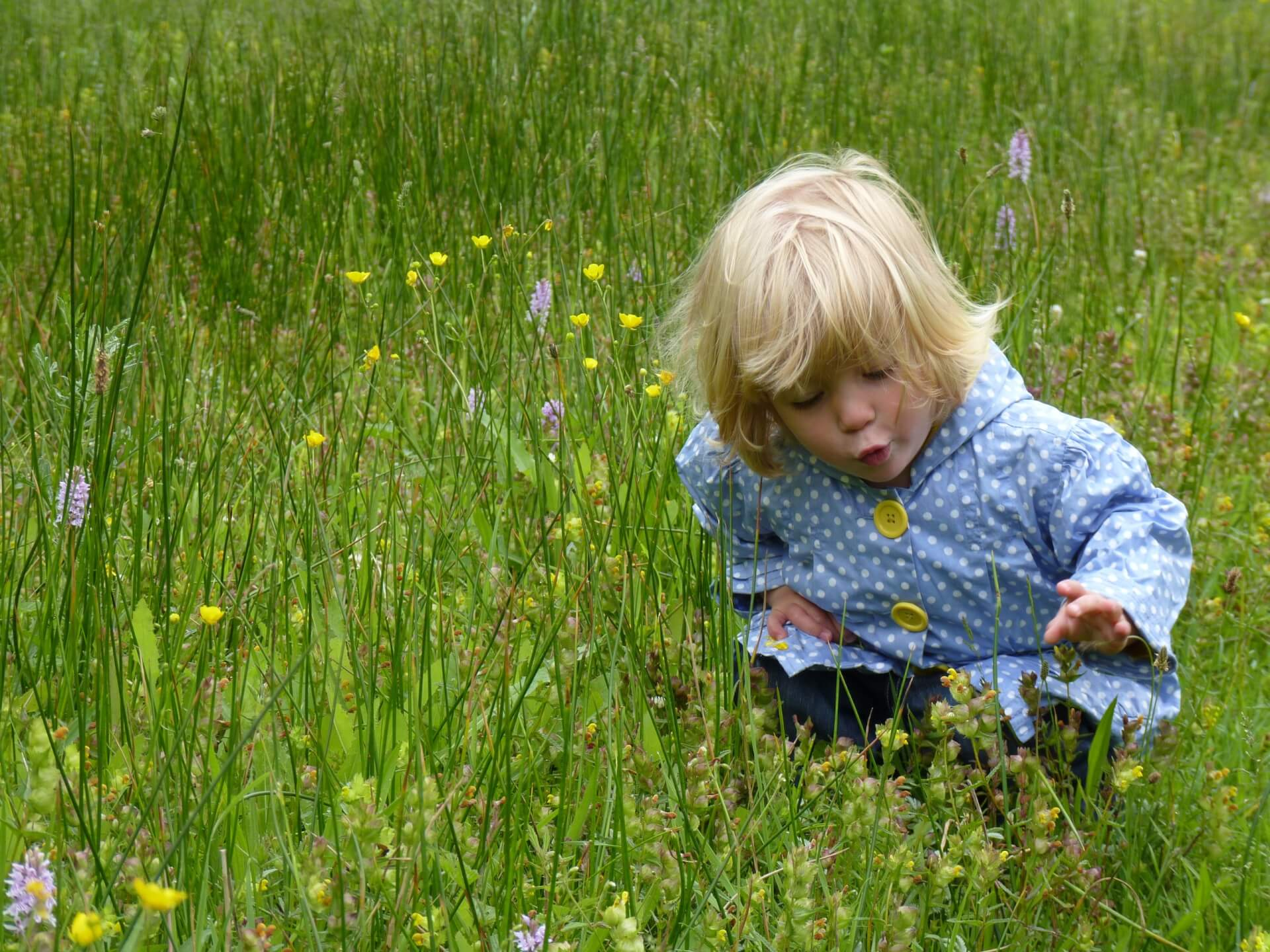 A small child wearing a blue coat in a green field looking at the wild flowers